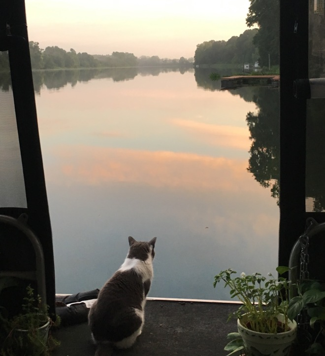 Boat cat, cat life, liveaboard cat, river cat